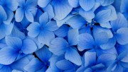Flowers and Gardens HQ wallpapers Collection 1 4b7f0a108223757
