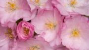 Flowers and Gardens HQ wallpapers Collection 1 Ed3ad2108224570